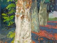 Plane Trees, Provence, oil on canvas, 50cm x 70cm
